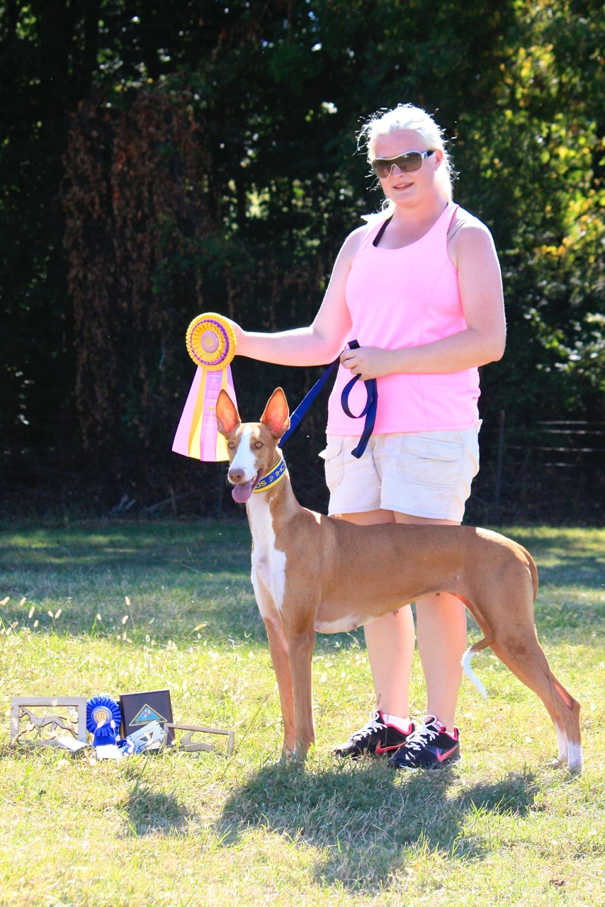 AKC Lure Coursing Best of Breed & 1st Place Specials Stake