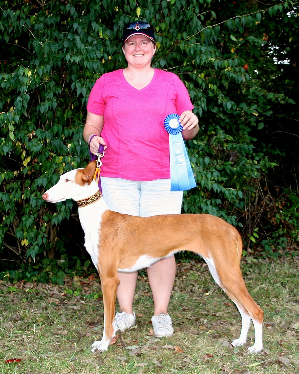 ASFA Lure Coursing 1st Place Open B Stake